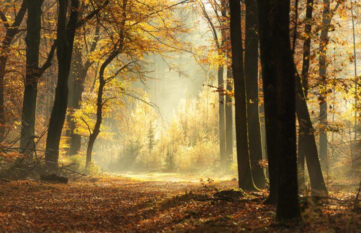 Sonbahar/güz ayı ölüm ayı mı? Sonbahar mevsimi neden hüzün mevsimidir? Sonbahar ayında neden ölüm oranı yüksektir?