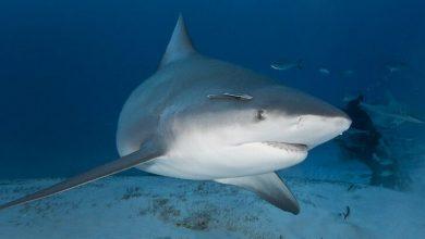 ABD'de hamile bir kadın eşini köpekbalığı saldırısından kurtardı