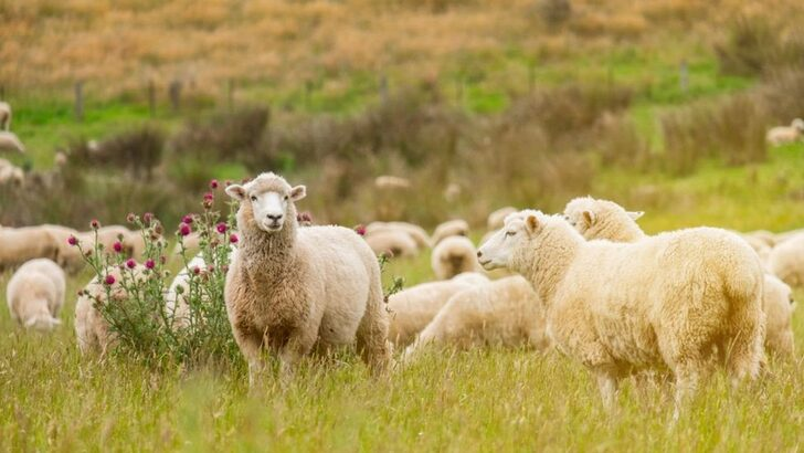 İşte koronavirüse yakalanma riskine açık 26 hayvan türü!